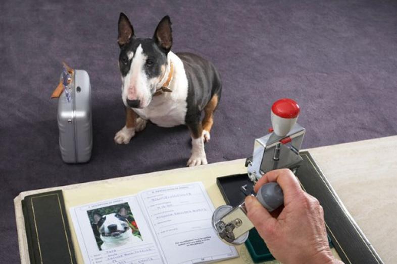 Ветеринарный паспорт выдававшийся на собаку в 80 годах задумчиво взглянула