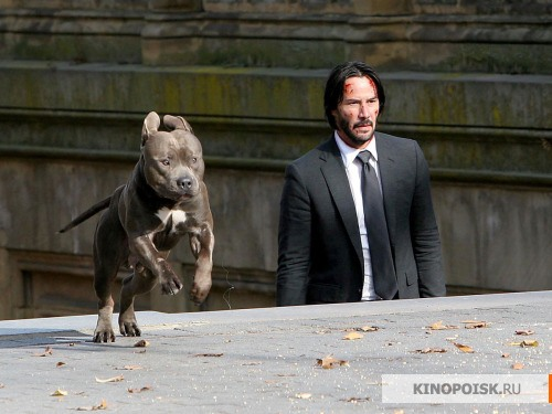 kinopoisk.ru-John-Wick_3A-Chapter-Two-2881364.jpg